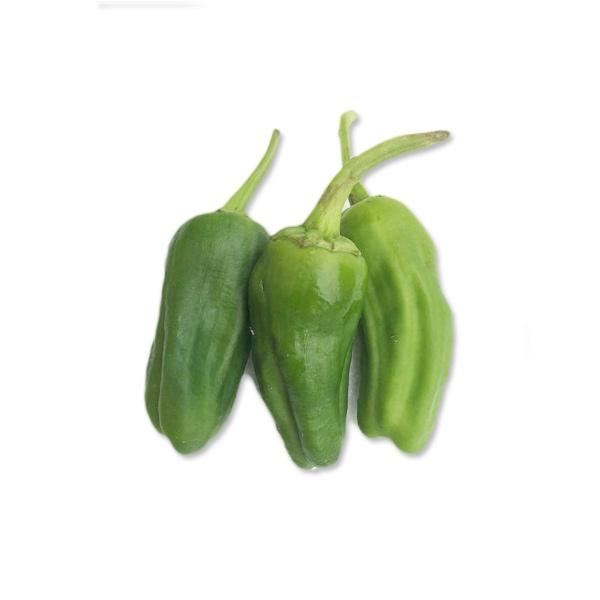 how to grow pimientos de padron